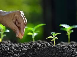 Planting Our Church… Again