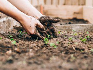 Plantar nuestra iglesia… otra vez