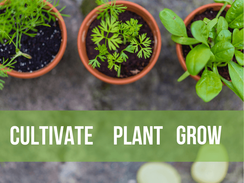 Cultivate, Plant and Grow (SpringLife 2007)